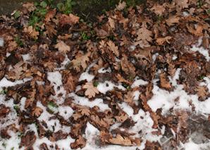 Leaves_on_snow
