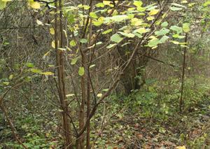Wildorchard