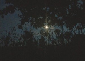 Moon in orchard