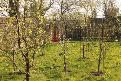 Orchard April 2020